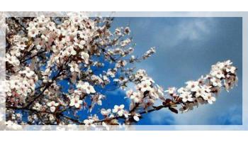 Стимуляторы роста растений весной. Кашу маслом не испортишь? Как не перейти грань. (Часть 2)