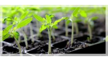 Стимуляторы роста растений весной. Кашу маслом не испортишь? Как не перейти грань. (Часть 3)