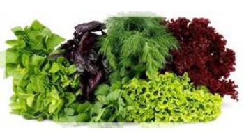 المحاصيل الخضراء